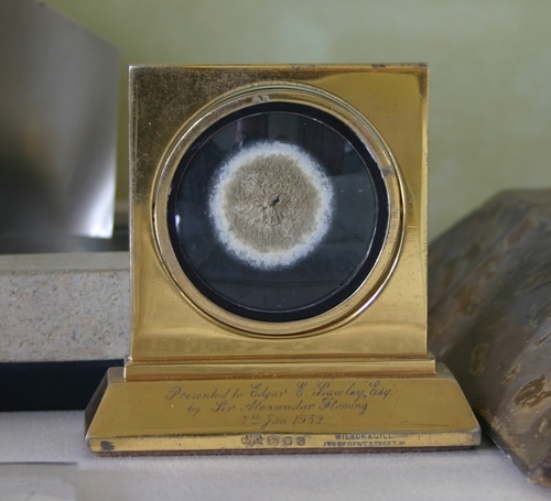 This penicillin specimen in a gilded frame by Wilson & Gill, was presented in 1952 by Alexander Fleming to Edgar E. Lawley
